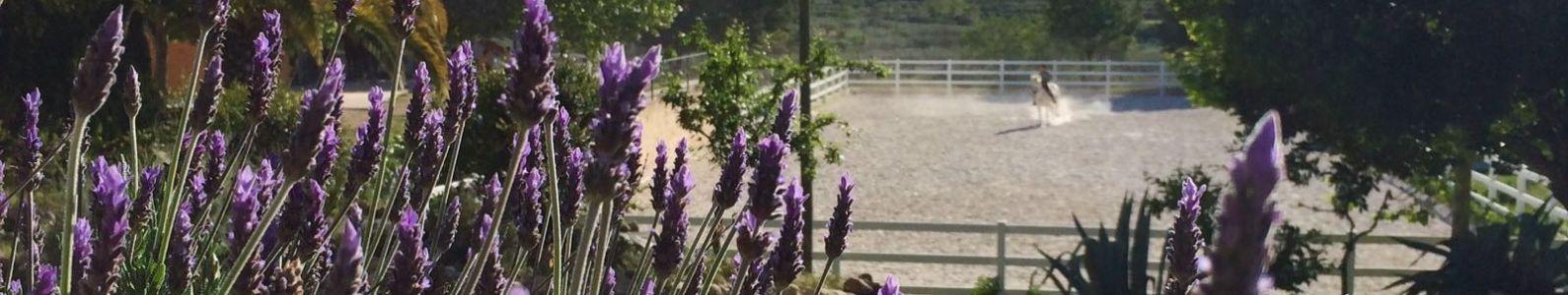 Actividades. :: casa rural valencia casa rural con granja  casa rural con cuadras caballos relajación spa terapias productos ecológicos comida casera sana